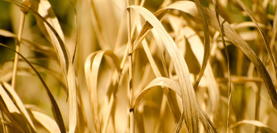 Communiqué – Classement en situation de calamité agricole : courrier des parlementaires creusois au Ministre de l'Agriculture